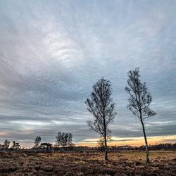 Wolken en bomen