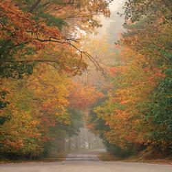 Bosweggetje in de herfst te Bergen op Zoom