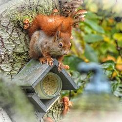 Ook eekhoorntjes