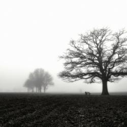 eik in mist