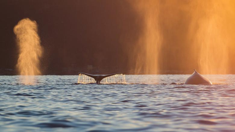 Arctic light - 3 -