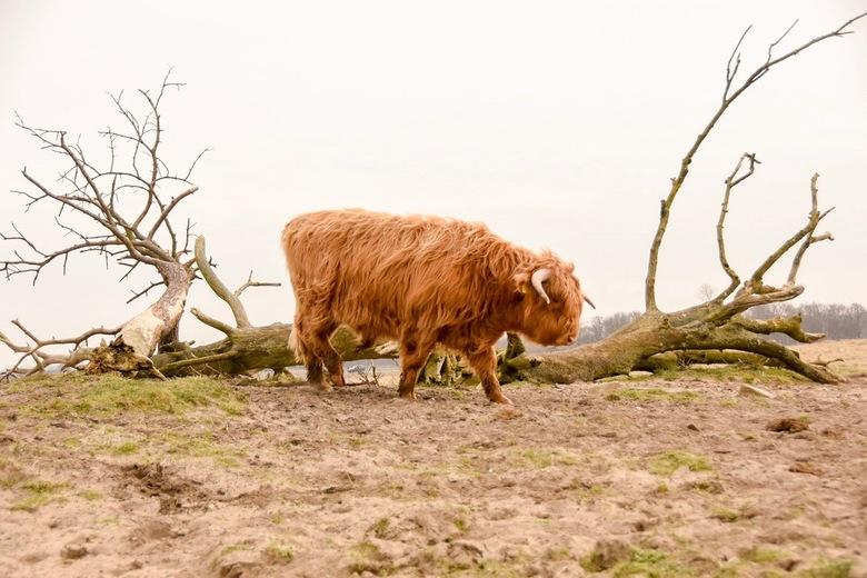 Wild Nature -
