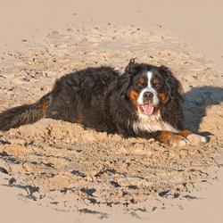 Amber op het strand