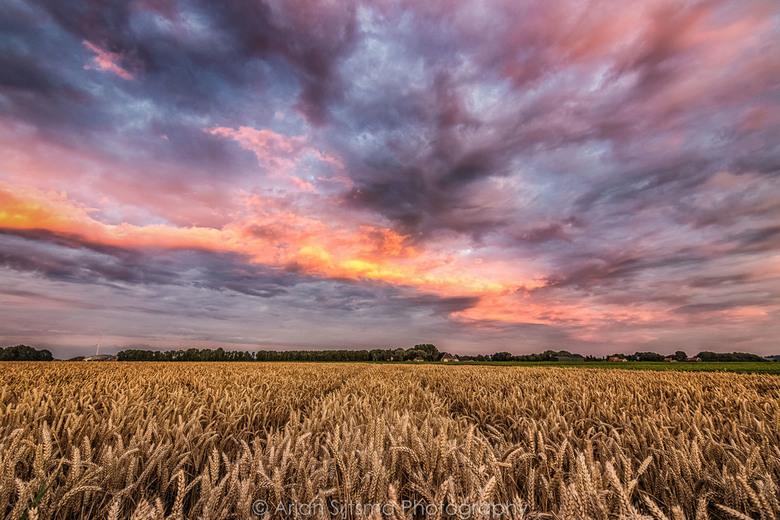 Schitterende luchten boven de graanvelden III