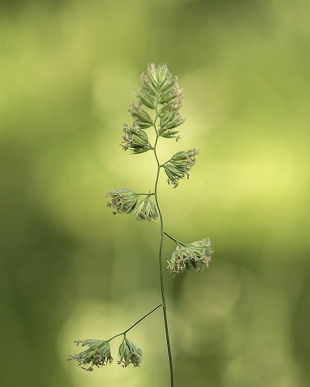 Sierlijk - Even een rondje park gelopen vanmiddag die vol pluimen en graansoorten staat, leuke objecten om te fotograferen. <br /> <br /> Bedankt vo