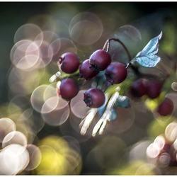 Berries & bubbles