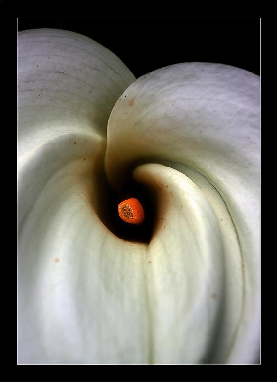 Darkness... - Deze bloem met een 50mm lens gefotografeerd. Daarna in photoshop elements iets qua licht, contract en lagen aangepast, met dit als resul