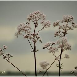 Lucht, streepje water en bloei.
