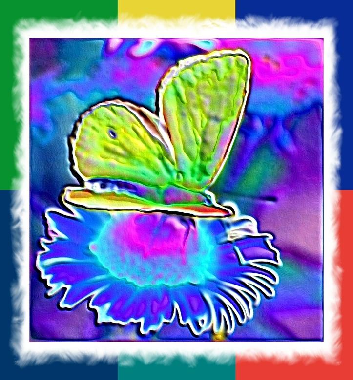 Door vlinder-ogen - Ik kreeg in de warme zon ineens de gedachte, dat vlinders de dingen waarschijnlijk heel anders zien dan wij ... De bloemen, daarva