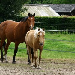 Paarden Collenso park Soest