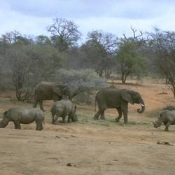 Olifanten in Africa