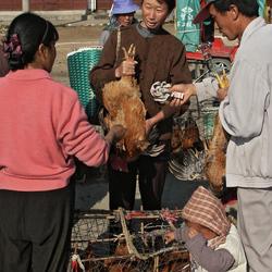 Kippenmarkt