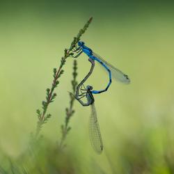 Acrobatic love