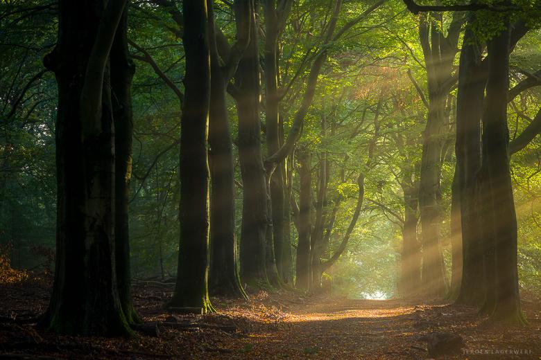 Zonsopkomst - Nog maar eentje.<br /> Bezeten als ik ben van bossen...<br /> <br /> Exif: 64mm, F8, 1s, iso 100