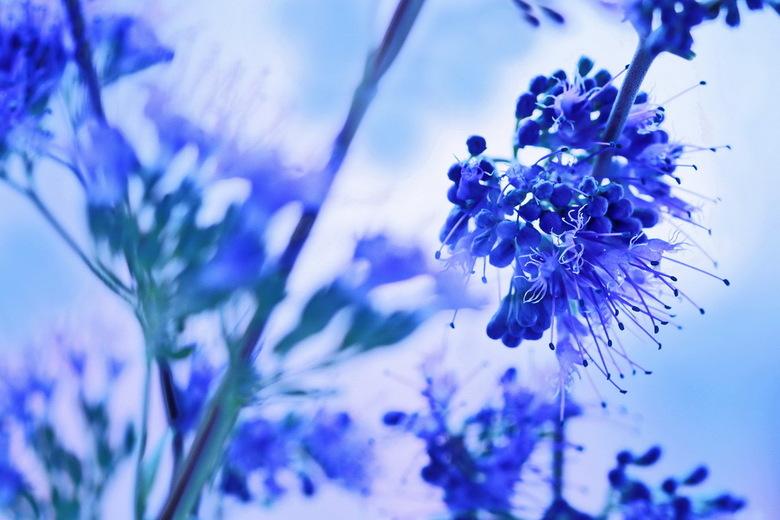 BLOEMEN VAN KRUIDEN? - Achter ons huis is een gemeente-tuin. Daar zag ik deze bloemetjes staan. Weet niet wat het is, maar toen ik er aan rook, rook i
