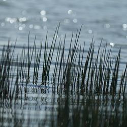 Waterreflectie
