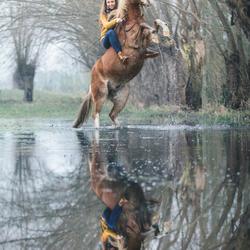 Reflexie in de plas