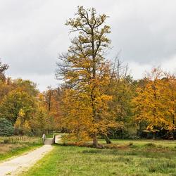 Herfstkleuren in Delden