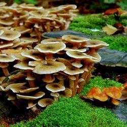 Hoofdgerecht: bospaddestoelen op een bedje van mos