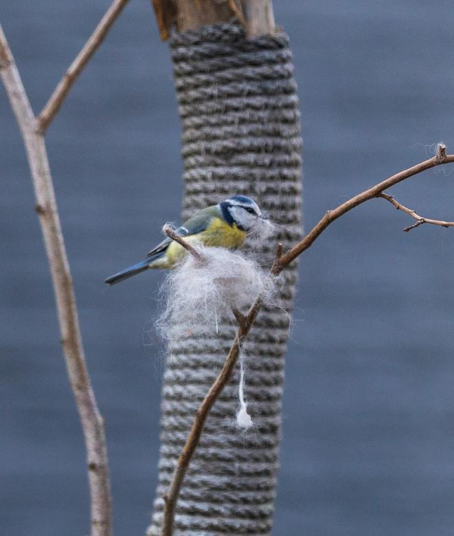 Haartjes voor in mijn nestje... -