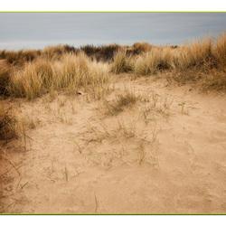 winterse duinen