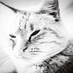 poesie cat