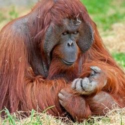 mmmm, zijn mijn nagels nog schoon.