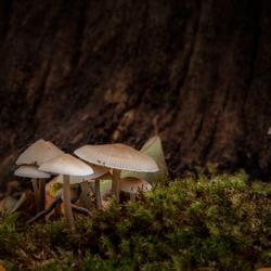 Beautiful fungi