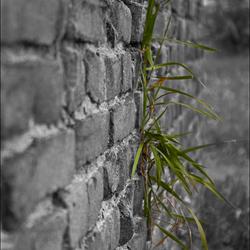 Gras uit de muur