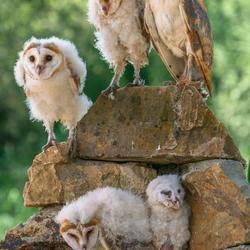 Familie Kerkuil