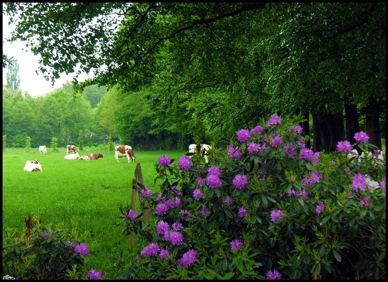 Land van Bartje - Drenthe is niet alleen het land van Bartje en de hunebedden maar zeker ook een provincie waar je prachtig kunt wandelen en fietsen.