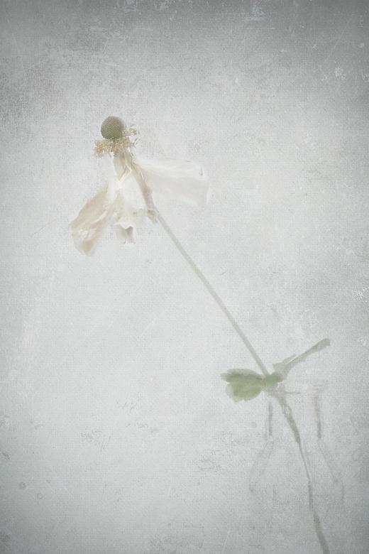 I will dance till the end ! - Slecht weer, binnen blijven, bloemetje geplukt, textuurtje erbij, blij met het resultaat !