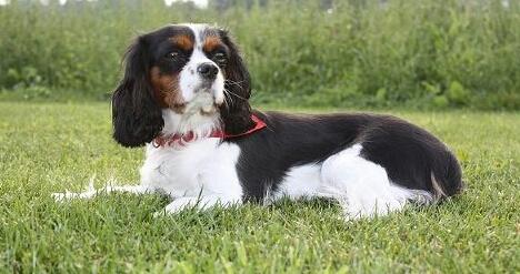 My Cute dog ,Senna - mijn mooie hondje, Senna
