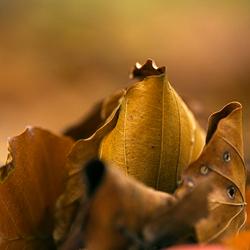 Echt herfst nu