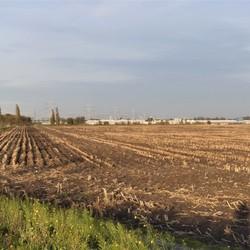P1040678 Oranje polder Na de Mais oogst  31 okt 2018