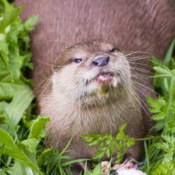 Otter Lunch