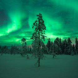 Noorderlicht in Lapland