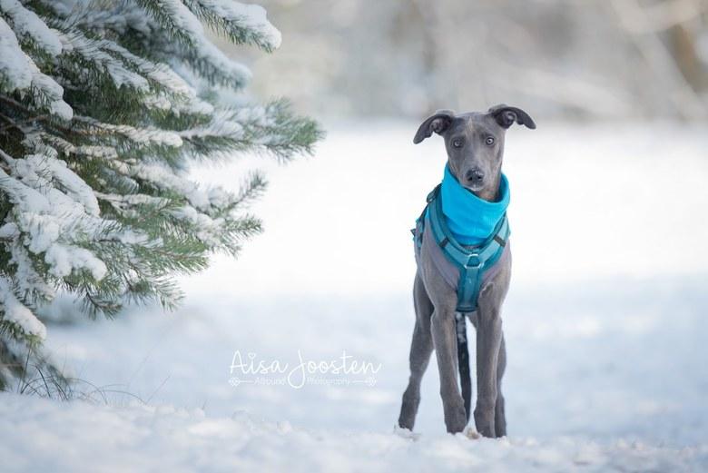Mila's eerste sneeuw - Mila's eerste keer in de sneeuw. Wat heeft ze genoten