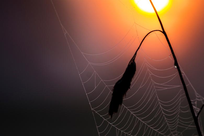 zonopkomst - spinnenweb met opkomende zon