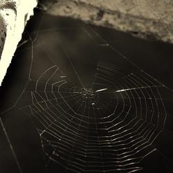 spinnenweb in t zwart