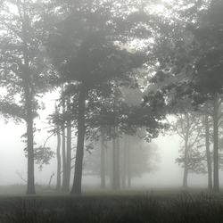 Mist (erious)
