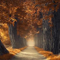 Textures of autumn