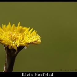 Klein Hoefblad