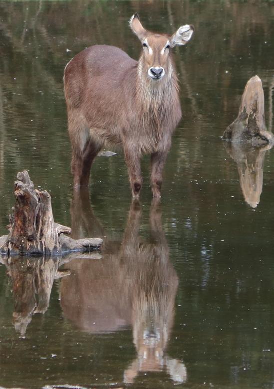 aangepaste foto burgers zoo  - Na advies de foto aangepast. Meer gecropt.  Eerst geplaatste foto staat er nog op.