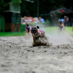 Nederlands Kampioenschap Windhondenrennen