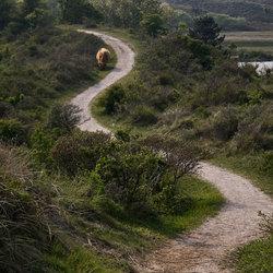 Volg het pad tot aan de Schotse Hooglander