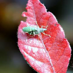love bugs / bugs love