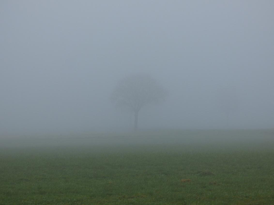 boom in de mist #weinigcontrast