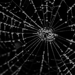 Spiderdrips