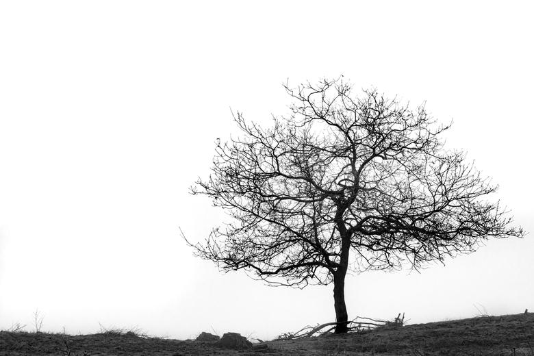simplicity - een boom aan de rand van de zandverstuiving bij natuurgebied de duiventoren  op een mistige zondag.